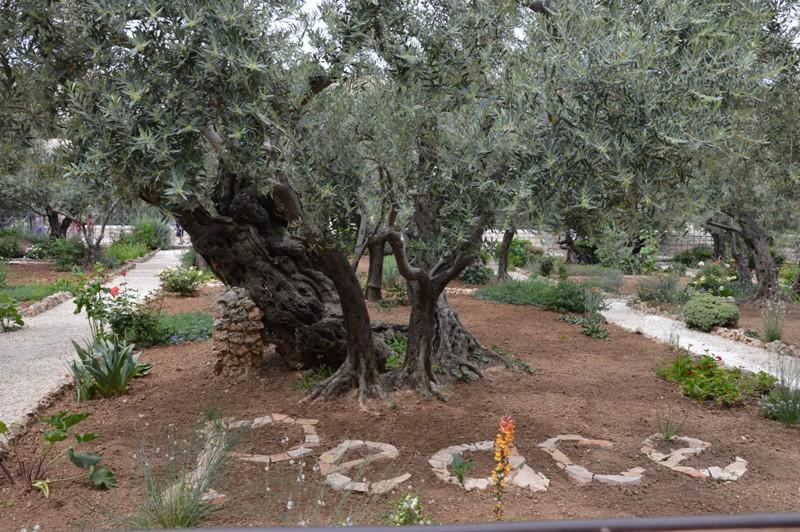 Gerusalemme dove tutto ha inizio viaggi arte e cucina for Il giardino degli ulivi monteviale